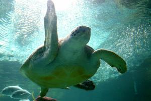 Anglesey Sea Zoo image 1